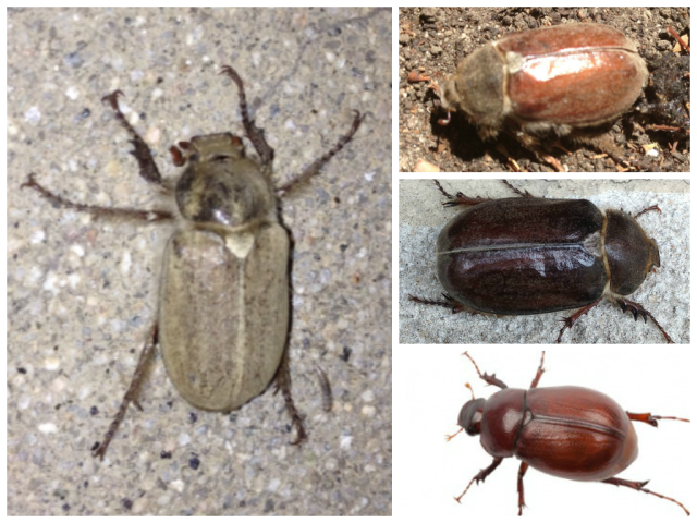 Beetle collage